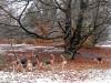 winterwandeling-2010-12