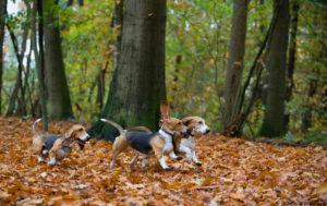 daarna heerlijk het bos in!