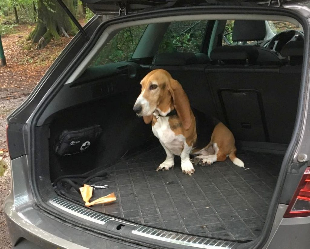 Wandelen in het bos? Dexter gaat lekker niet uit de auto: ja doei, het regent!!